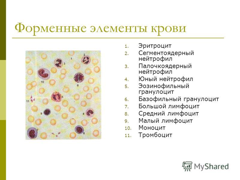 Форменные элементы крови 1. Эритроцит 2. Сегментоядерный нейтрофил 3. Палочкоядерный нейтрофил 4. Юный нейтрофил 5. Эозинофильный гранулоцит 6. Базофильный гранулоцит 7. Большой лимфоцит 8. Средний лимфоцит 9. Малый лимфоцит 10. Моноцит 11. Тромбоцит