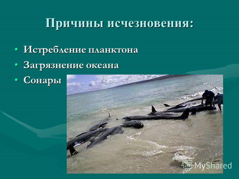 Причины исчезновения: Истребление планктонаИстребление планктона Загрязнение океанаЗагрязнение океана СонарыСонары