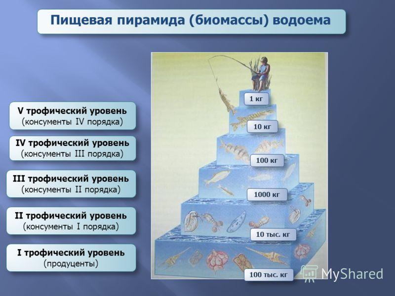 Пищевая пирамида (биомассы) водоема I трофический уровень (продуценты) II трофический уровень (консументы I порядка) III трофический уровень (консументы II порядка) IV трофический уровень (консументы III порядка) V трофический уровень (консументы IV