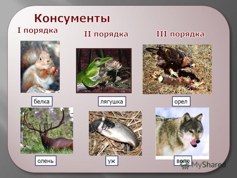 волк орел уж лягушкабелка олень
