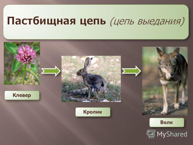 Клевер Кролик Волк