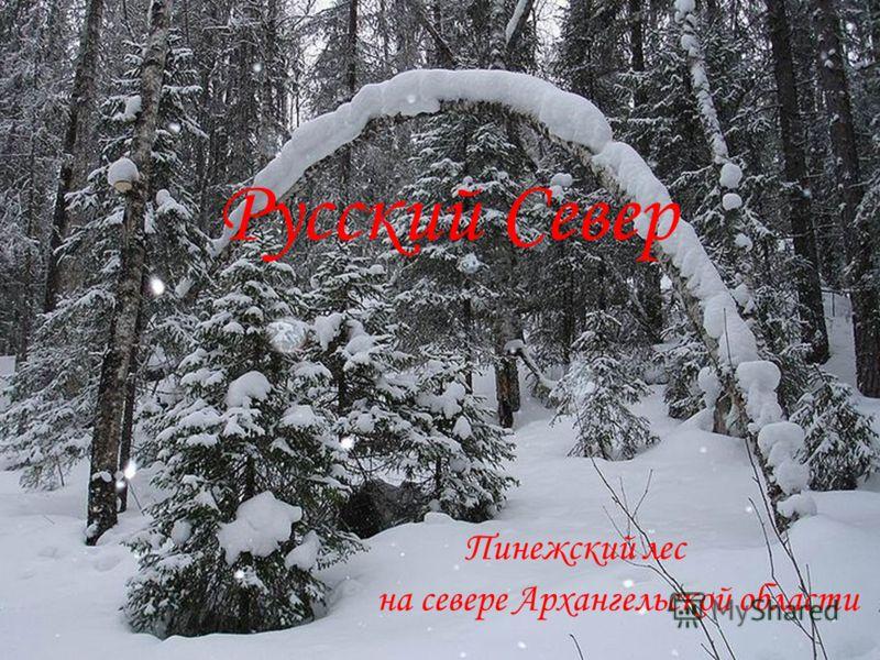 Русский Север Пинежский лес на севере Архангельской области