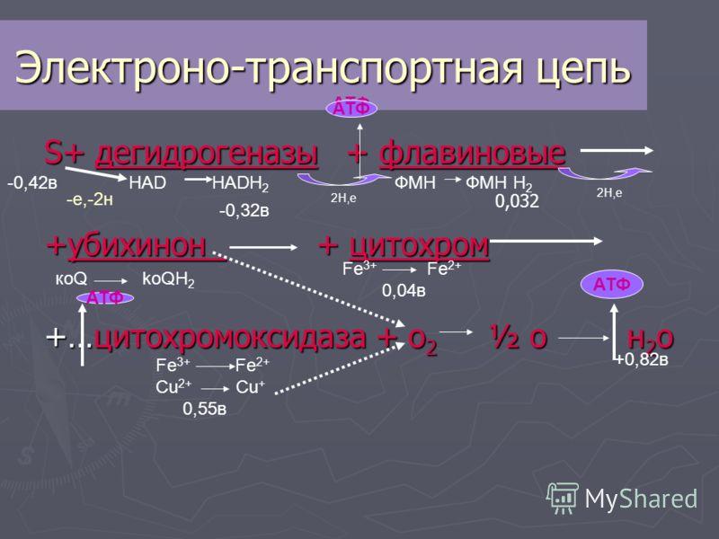 Электроно-транспортная цепь S+ дегидрогеназы + флавиновые +убихинон + цитохром +…цитохромоксидаза + о 2 ½ о н 2 о -0,42в +0,82в ФМН ФМН Н 2 коQ koQH 2 Fe 3+ Fe 2+ Cu 2+ Cu + 0,55в Fe 3+ Fe 2+ 0,04в HAD HADH 2 АТФ -0,32в -е,-2н АТФ 2Н,e 2H,e 0,032