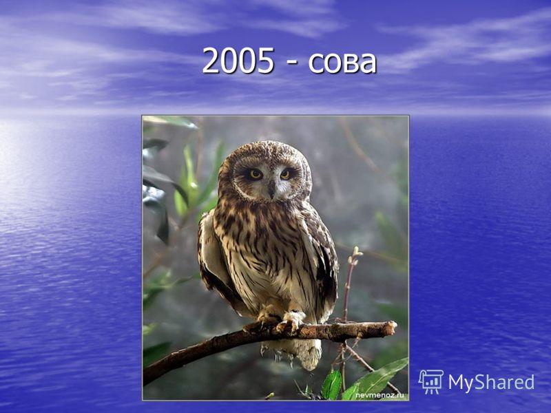 2005 - сова 2005 - сова
