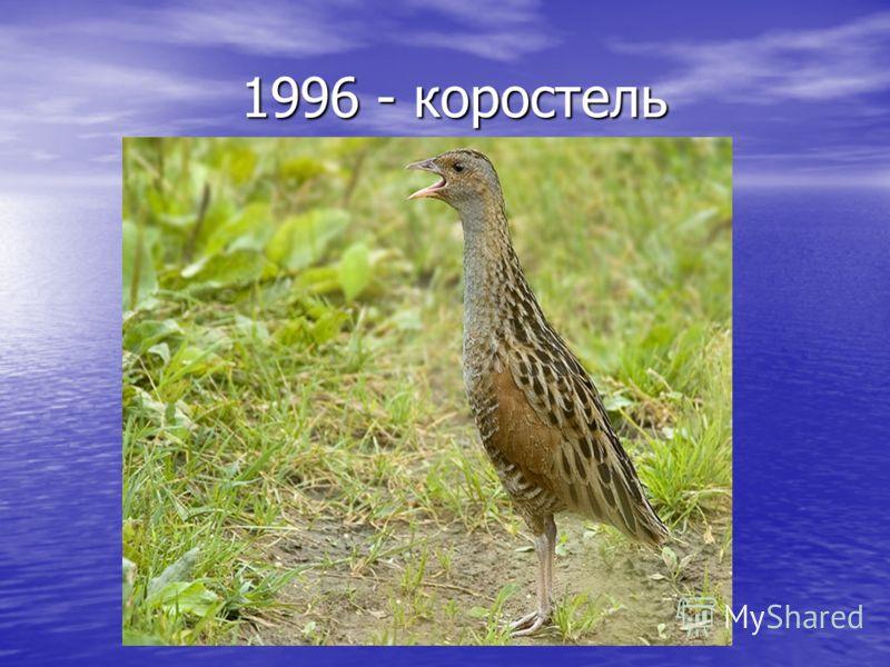 1996 - коростель 1996 - коростель