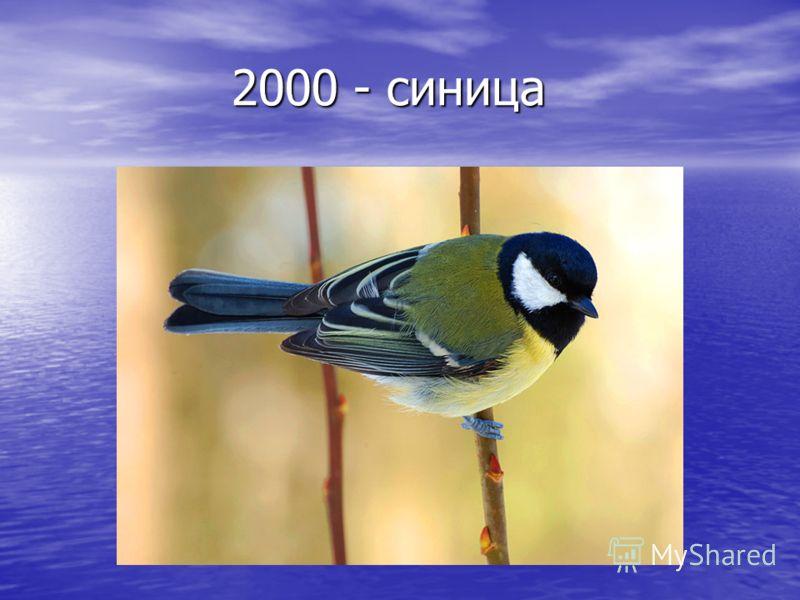 2000 - синица 2000 - синица