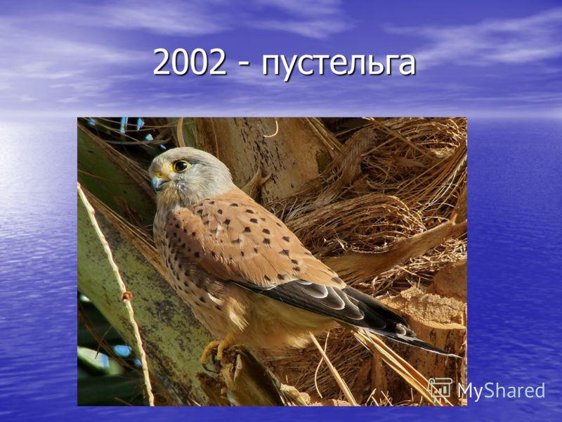 2002 - пустельга 2002 - пустельга