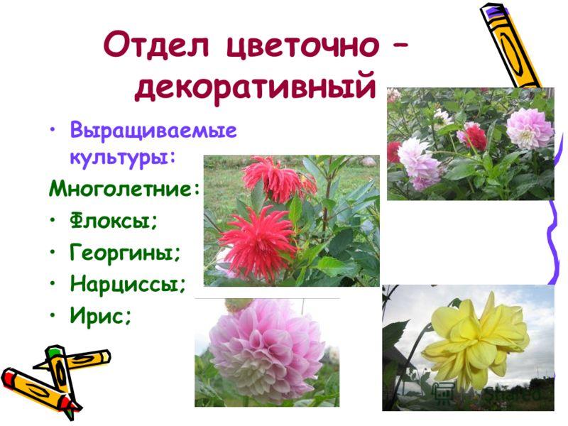 Отдел цветочно – декоративный Выращиваемые культуры: Многолетние: Флоксы; Георгины; Нарциссы; Ирис;