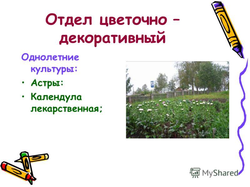 Отдел цветочно – декоративный Однолетние культуры: Астры: Календула лекарственная;