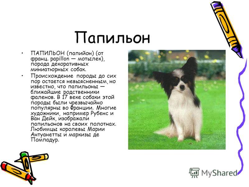 Папильон ПАПИЛЬОН (папийон) (от франц. papillon мотылек), порода декоративных миниатюрных собак. Происхождение породы до сих пор остается невыясненным, но известно, что папильоны ближайшие родственники фаленов. В 17 веке собаки этой породы были чрезв