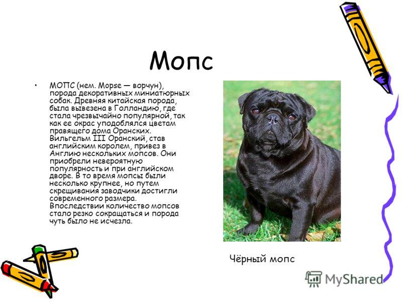 Мопс МОПС (нем. Mopse ворчун), порода декоративных миниатюрных собак. Древняя китайская порода, была вывезена в Голландию, где стала чрезвычайно популярной, так как ее окрас уподоблялся цветам правящего дома Оранских. Вильгельм III Оранский, став анг