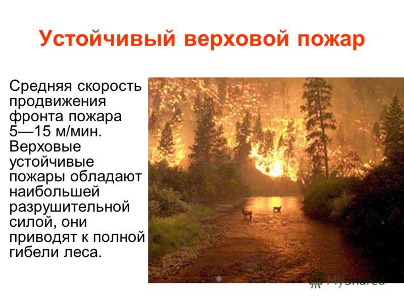 Устойчивый верховой пожар Средняя скорость продвижения фронта пожара 515 м/мин. Верховые устойчивые пожары обладают наибольшей разрушительной силой, они приводят к полной гибели леса.