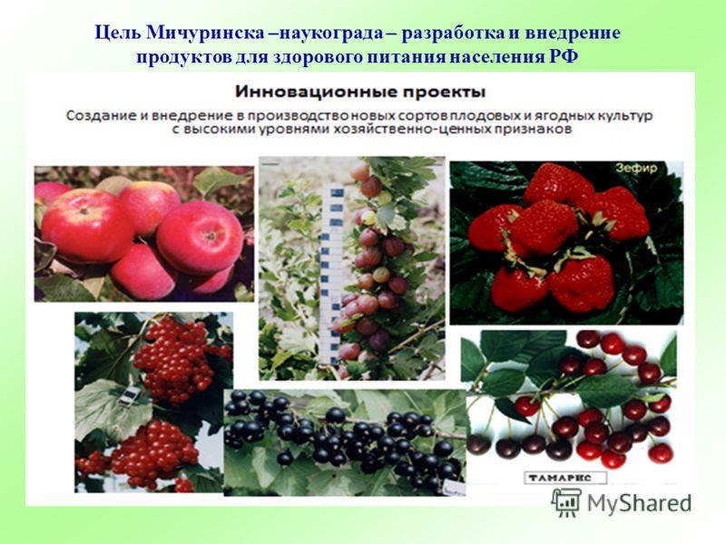 Цель Мичуринска –наукограда – разработка и внедрение продуктов для здорового питания населения РФ