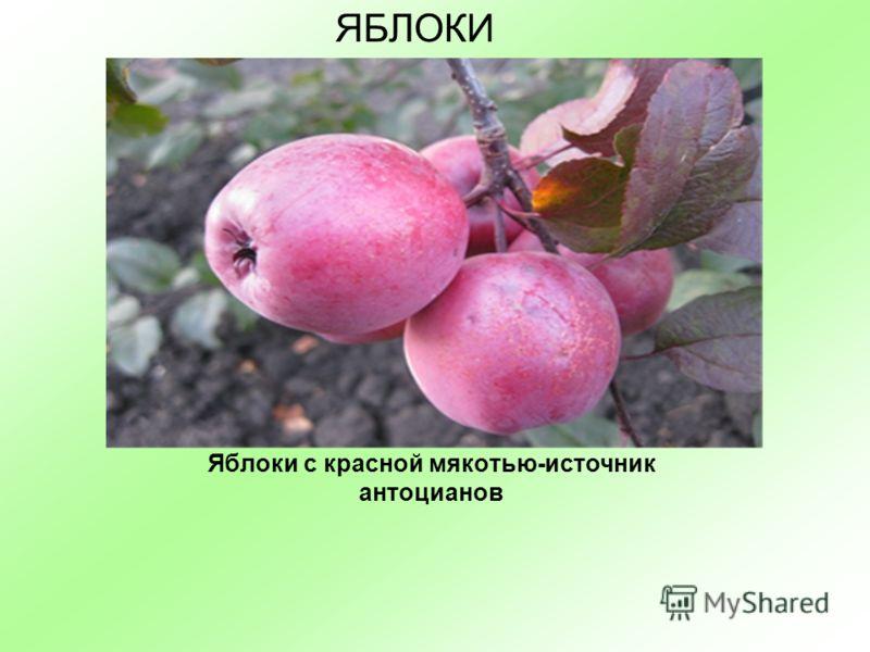 Яблоки с красной мякотью-источник антоцианов ЯБЛОКИ