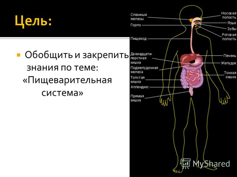 Обобщить и закрепить знания по теме: «Пищеварительная система»