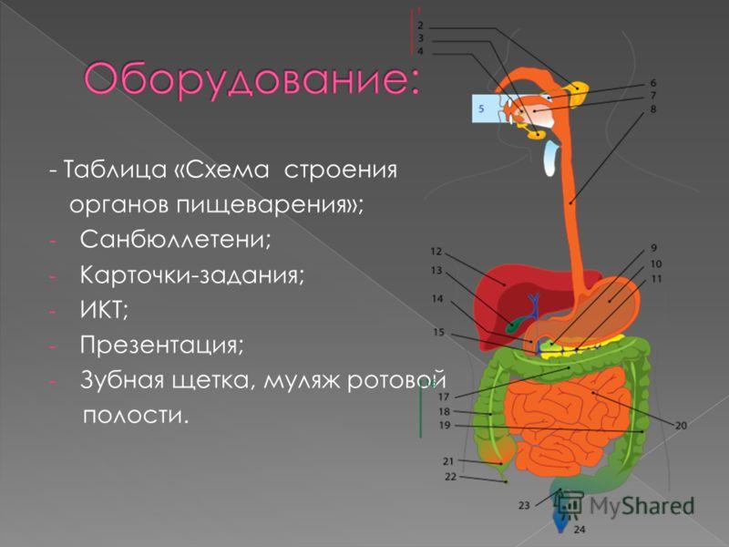 - Таблица «Схема строения органов пищеварения»; - Санбюллетени; - Карточки-задания; - ИКТ; - Презентация; - Зубная щетка, муляж ротовой полости.