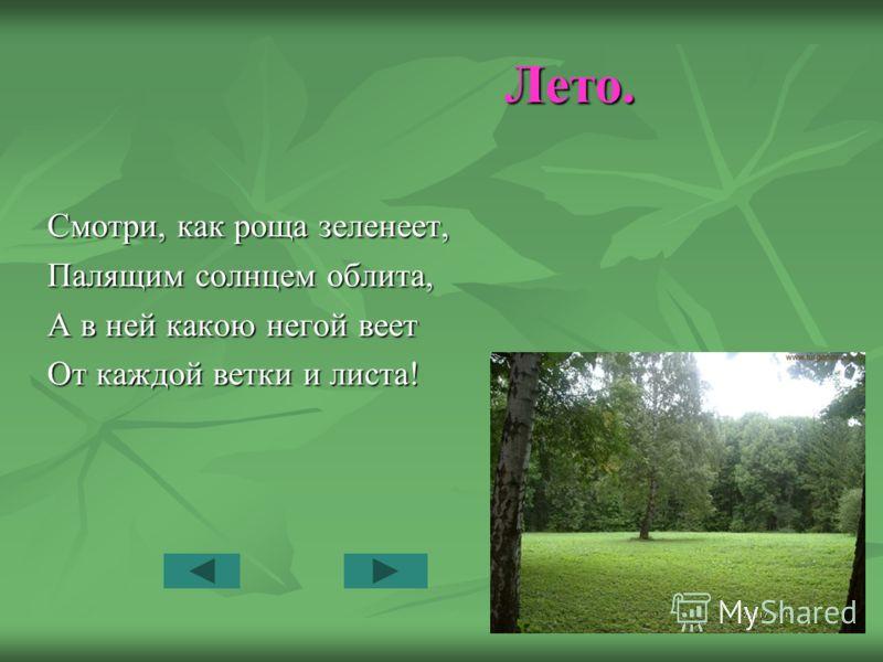 Лето. Лето. Смотри, как роща зеленеет, Палящим солнцем облита, А в ней какою негой веет От каждой ветки и листа!