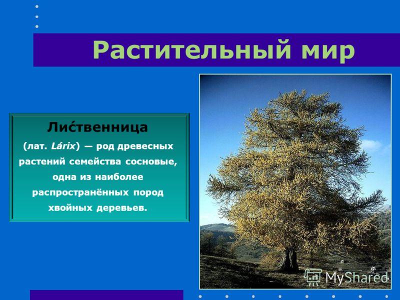 Ли́ственница (лат. Lárix) род древесных растений семейства сосновые, одна из наиболее распространённых пород хвойных деревьев.