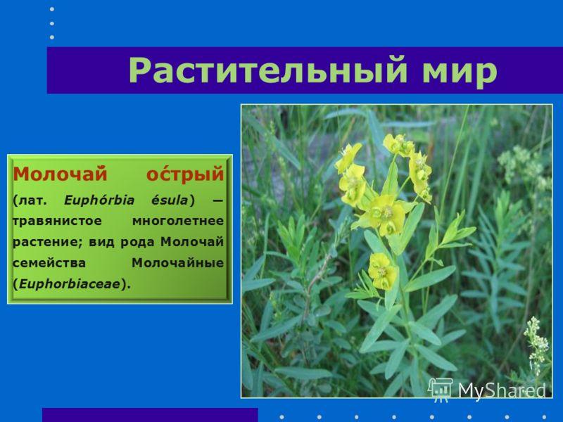Растительный мир Молоча́й о́стрый (лат. Euphórbia ésula) травянистое многолетнее растение; вид рода Молочай семейства Молочайные (Euphorbiaceae).