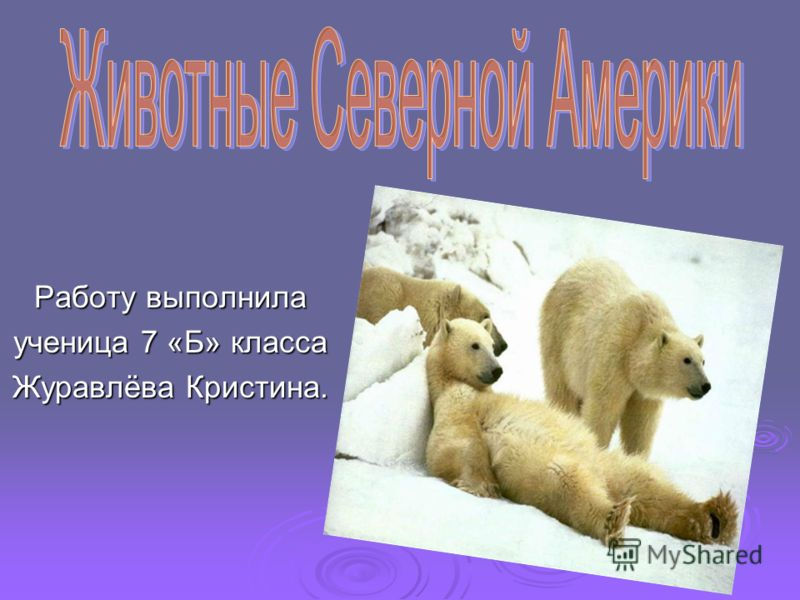 Работу выполнила ученица 7 «Б» класса Журавлёва Кристина.