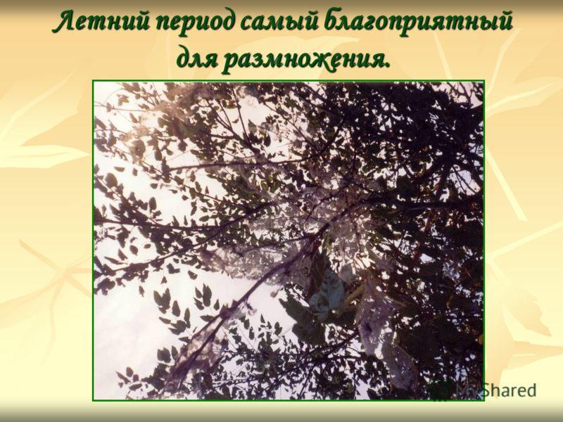 Летний период самый благоприятный для размножения.