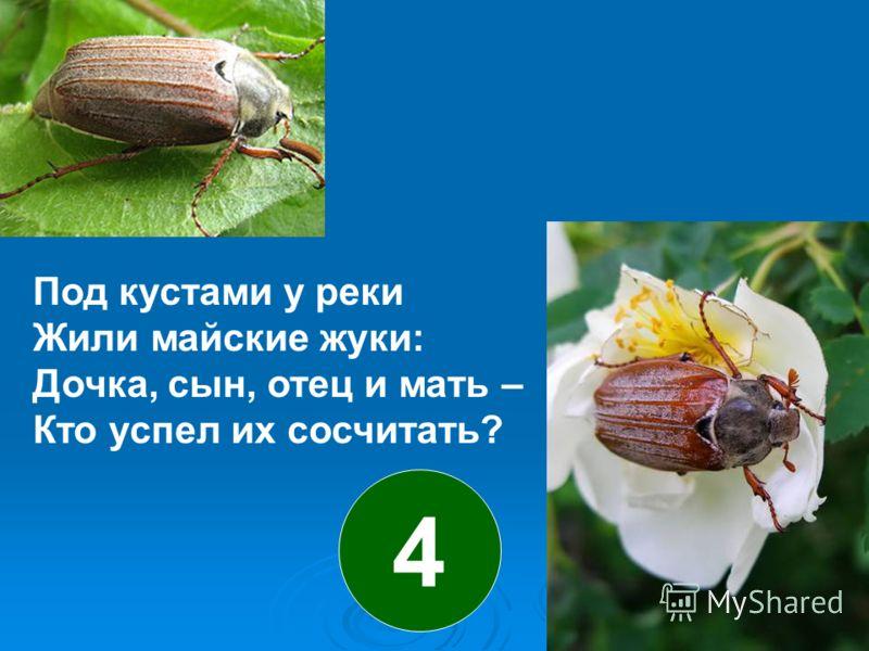 Под кустами у реки Жили майские жуки: Дочка, сын, отец и мать – Кто успел их сосчитать? 4