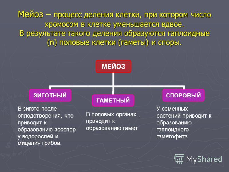 Мейоз – процесс деления клетки, при котором число хромосом в клетке уменьшается вдвое. В результате такого деления образуются гаплоидные (n) половые клетки (гаметы) и споры. МЕЙОЗ ЗИГОТНЫЙГАМЕТНЫЙСПОРОВЫЙ В зиготе после оплодотворения, что приводит к