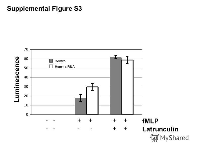 fMLP Latrunculin - - + + + + - - - - + + Control Hem1 siRNA Luminescence Supplemental Figure S3