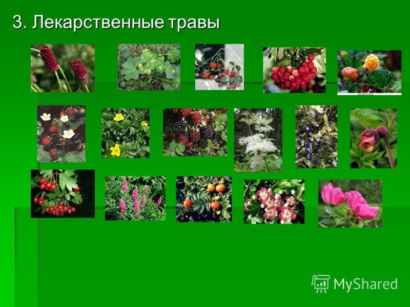3. Лекарственные травы