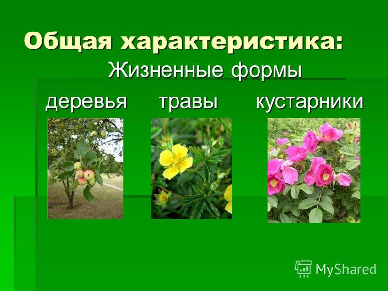 Общая характеристика: Жизненные формы деревья травы кустарники деревья травы кустарники
