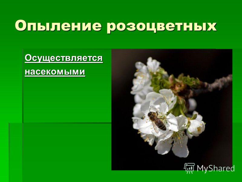 Опыление розоцветных Осуществляетсянасекомыми