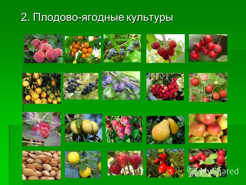 2. Плодово-ягодные культуры
