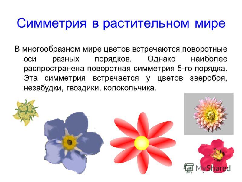 Симметрия в растительном мире В многообразном мире цветов встречаются поворотные оси разных порядков. Однако наиболее распространена поворотная симметрия 5-го порядка. Эта симметрия встречается у цветов зверобоя, незабудки, гвоздики, колокольчика.