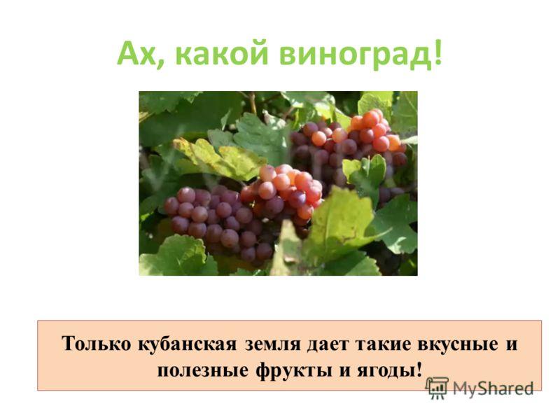 Ах, какой виноград! Только кубанская земля дает такие вкусные и полезные фрукты и ягоды!
