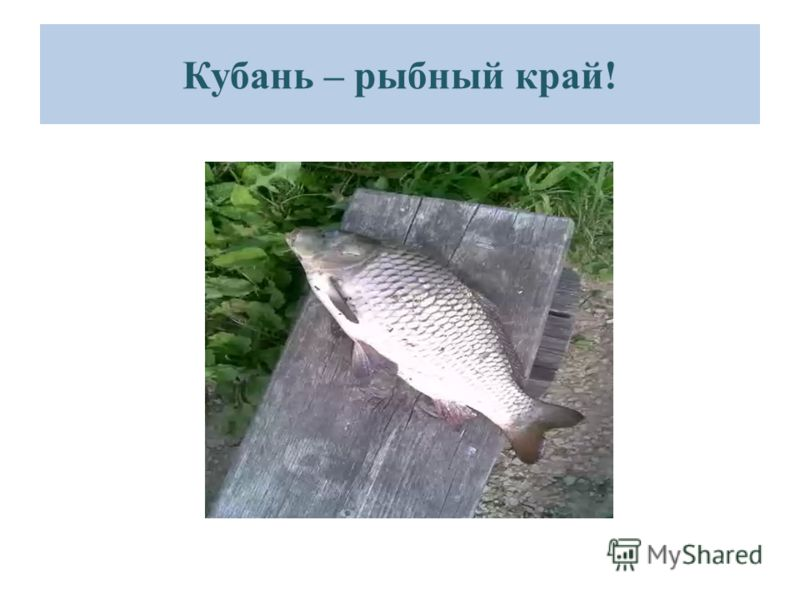 Кубань – рыбный край!