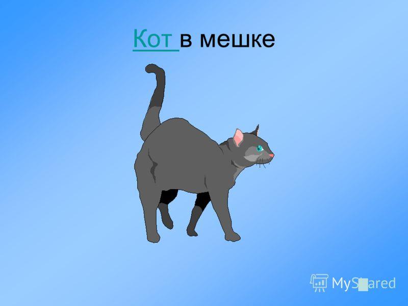 Кот Кот в мешке