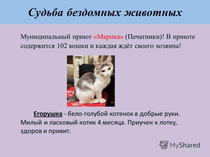 Судьба бездомных животных Муниципальный приют «Марика» (Печатники)! В приюте содержится 102 кошки и каждая ждёт своего хозяина! Егорушка - бело-голубой котенок в добрые руки. Милый и ласковый котик 4 месяца. Приучен к лотку, здоров и привит.