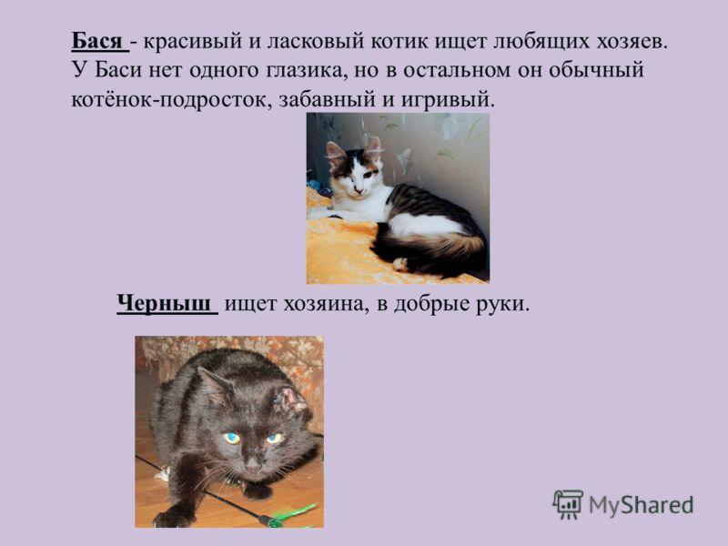 Бася - красивый и ласковый котик ищет любящих хозяев. У Баси нет одного глазика, но в остальном он обычный котёнок-подросток, забавный и игривый. Черныш ищет хозяина, в добрые руки.