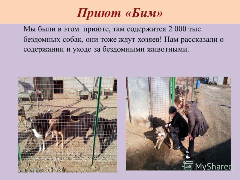 Приют «Бим» Мы были в этом приюте, там содержится 2 000 тыс. бездомных собак, они тоже ждут хозяев! Нам рассказали о содержании и уходе за бездомными животными.