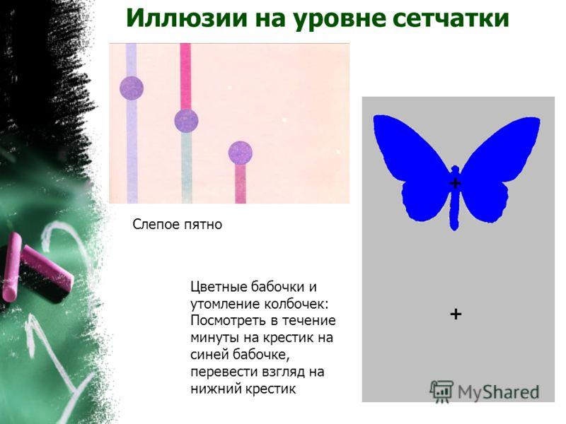 Иллюзии на уровне сетчатки Слепое пятно Цветные бабочки и утомление колбочек: Посмотреть в течение минуты на крестик на синей бабочке, перевести взгляд на нижний крестик