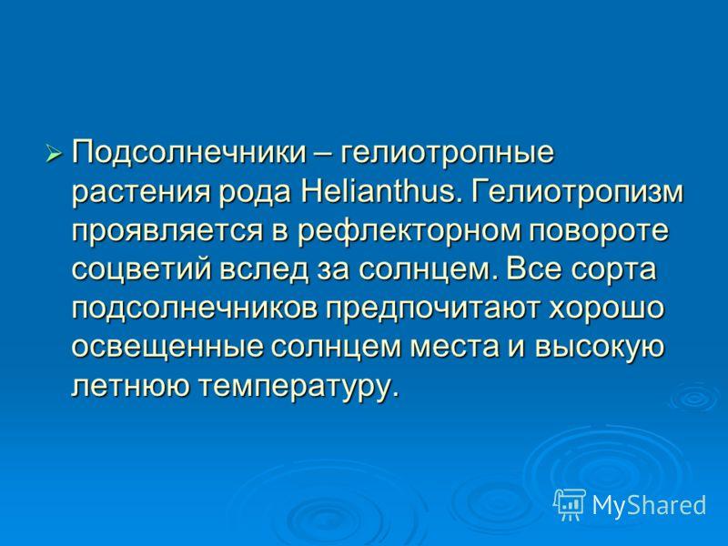 Подсолнечники – гелиотропные растения рода Helianthus. Гелиотропизм проявляется в рефлекторном повороте соцветий вслед за солнцем. Все сорта подсолнечников предпочитают хорошо освещенные солнцем места и высокую летнюю температуру. Подсолнечники – гел