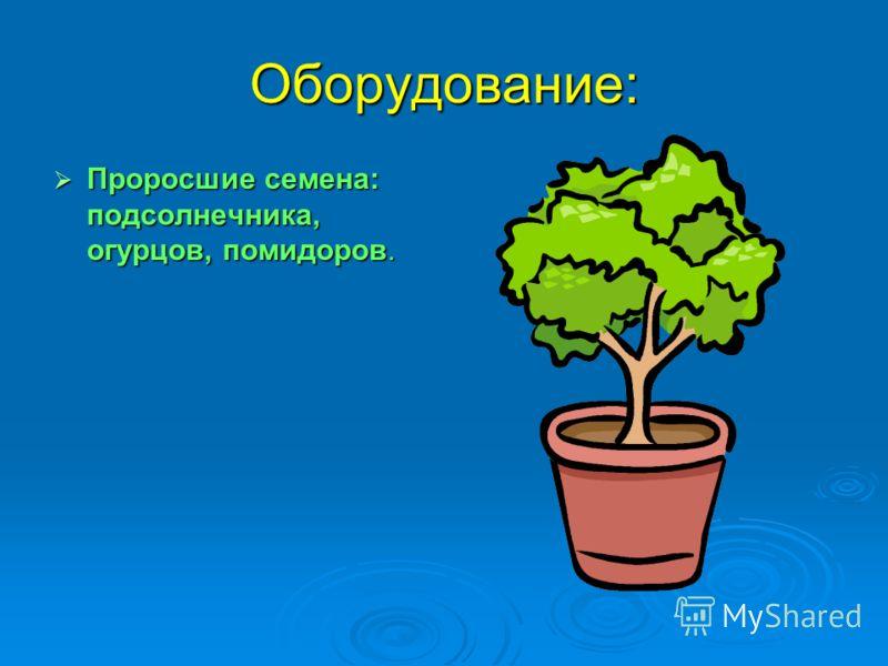 Оборудование: Проросшие семена: подсолнечника, огурцов, помидоров. Проросшие семена: подсолнечника, огурцов, помидоров.