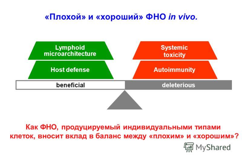 deleteriousbeneficial Lymphoid microarchitecture Host defense Systemic toxicity Autoimmunity «Плохой» и «хороший» ФНО in vivo. Как ФНО, продуцируемый индивидуальными типами клеток, вносит вклад в баланс между «плохим» и «хорошим»?