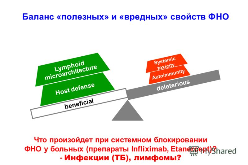 deleteriousbeneficial Lymphoid microarchitecture Host defense Systemic toxicity Autoimmunity deleterious beneficial Lymphoid microarchitecture Host defense Systemic toxicity Autoimmunity Баланс «полезных» и «вредных» свойств ФНО Что произойдет при си