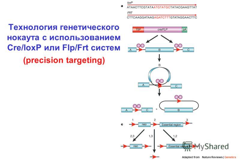 Технология генетического нокаута с использованием Cre/loxP или Flp/Frt систем (precision targeting) Adapted from Nature Reviews | Genetics