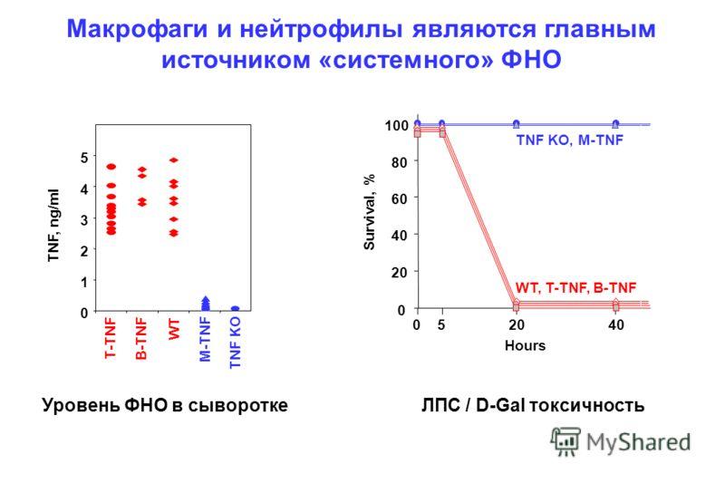 Макрофаги и нейтрофилы являются главным источником «системного» ФНО Survival, % 0 20 40 60 80 100 0520 Hours 40 WT, T-TNF, B-TNF TNF KO, M-TNF 0 1 2 3 4 5 M-TNF T-TNF B-TNF WT TNF KO TNF, ng/ml Уровень ФНО в сывороткеЛПС / D-Gal токсичность