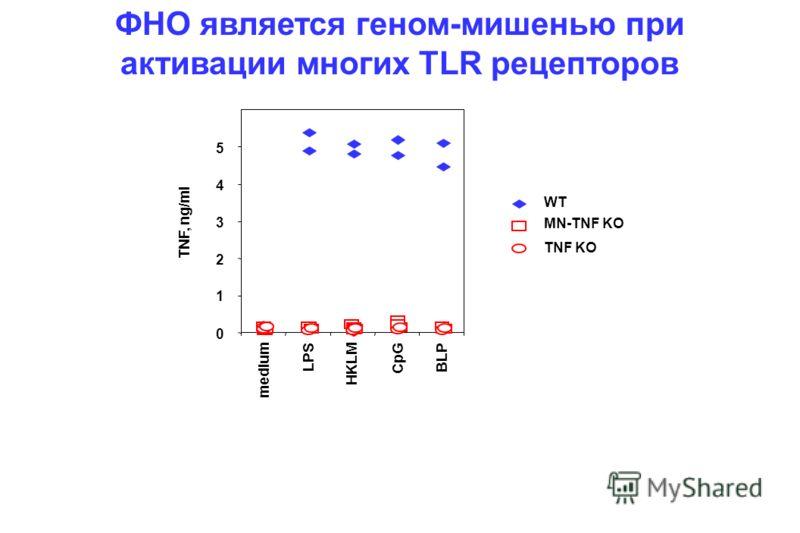0 1 2 3 5 TNF, ng/ml medium LPS HKLM CpG BLP WT MN-TNF KO TNF KO 4 ФНО является геном-мишенью при активации многих TLR рецепторов