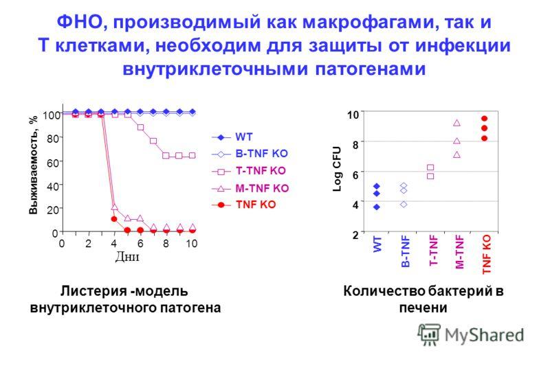 ФНО, производимый как макрофагами, так и T клетками, необходим для защиты от инфекции внутриклеточными патогенами B-TNF KO M-TNF KO T-TNF KO TNF KO WT 0 20 40 60 80 100 Выживаемость, % 2468 Дни 010 2 4 6 8 M-TNF TNF KO WT B-TNF T-TNF Log CFU Листерия