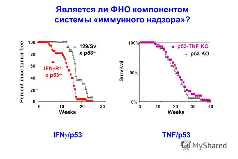 Является ли ФНО компонентом системы «иммунного надзора»? 0% 50% 100% 010203040 Weeks Survival p53 KO p53-TNF KO 100 80 60 40 20 0 Percent mice tumor free 01020 Weeks 129/Sv x p53 -/- IFN R -/- x p53 -/- IFN /p53 TNF/p53 30