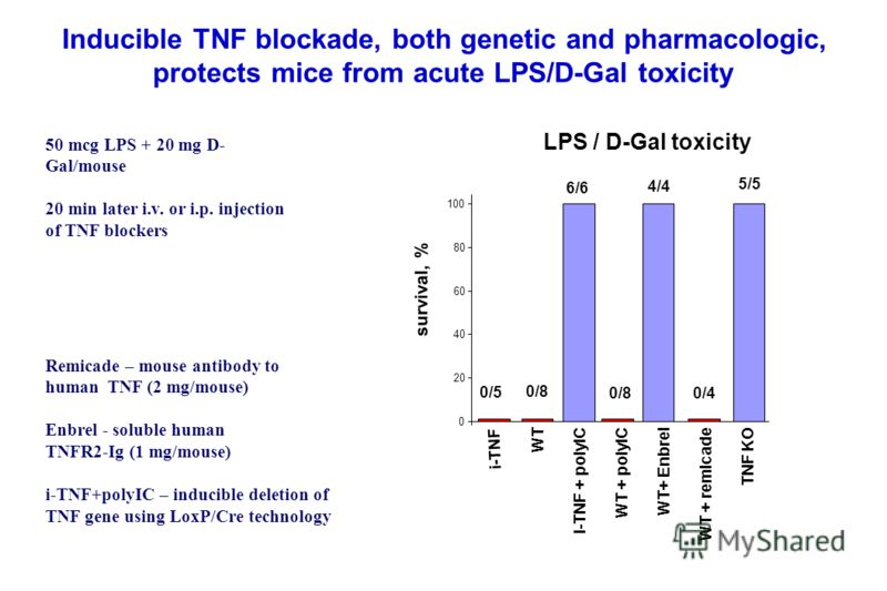 Inducible TNF blockade, both genetic and pharmacologic, protects mice from acute LPS/D-Gal toxicity 0 20 40 60 80 100 i-TNF WT i-TNF + polyIC WT + polyIC WT+ Enbrel WT + remicade TNF KO Remicade – mouse antibody to human TNF (2 mg/mouse) Enbrel - sol